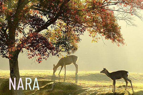image:NARA